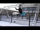 Ivan Gorojanin Spring Trainings