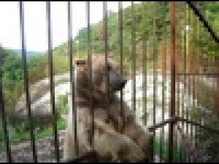 Ручной медведь в заповеднике