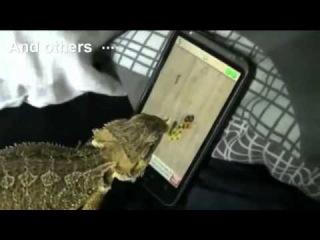 Самые смешные животные в мире 2012