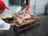 This Is So Sad To See How We Get Our Meat Foreal! ( Warning Graphic) - World Star Uncut