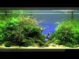 Aquascaping - The Art of the Planted Aquarium 2012, part 1