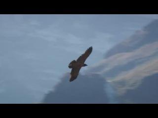 BBC: Мир природы. Африканские Драконовы горы (2010) SATRip Kinozal-MD.ru