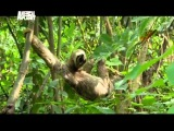 Animal Planet - В дебрях латинской америки