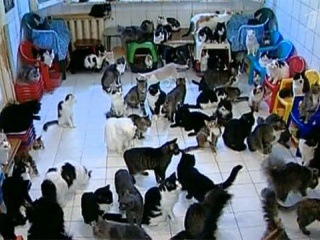 Норма жилплощади для домашних животных может появиться в нашей стране - Первый канал
