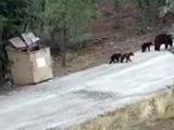 С риском для жизни жители американского штата Нью-Мексико вызволили из ловушки трех медвежат - Первый канал