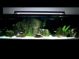 180 Gallon Tropheus Moorii and Ikola Tank with Universal Rocks 3D Feature Rocks