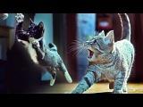 Коты на защите носков