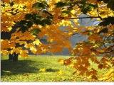 Юрий Бадалл - Осенний бал