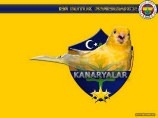 Fenerbahce - Kanaryam/Seda Sayan