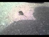 Мини-мышь на стройрынке на алмазной
