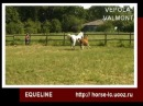 Mare Vepola, colt Valmont (video 03-06-2011)