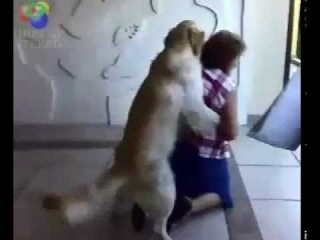 Озабоченная собака пристает к женщине