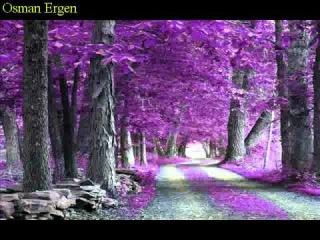 Doğanın renk sanatı....Farid Farjad kemanıyla.