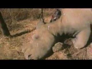 Call of Life Facing the Mass Extinction Трейлер к фильму о массовом вымирании видов
