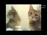 Кошка следит за собой! MyPet Studio