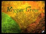 PAT KELLY - ANGEL OF THE MORNING - Reggae
