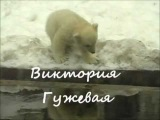 Виктория Гужевая - Песенка про медвежонка