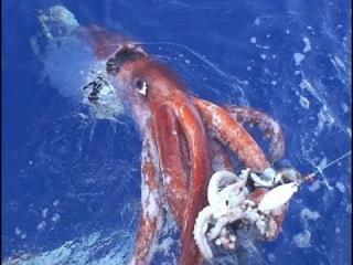 На крючке  Нашествие кальмаров - документальный фильм