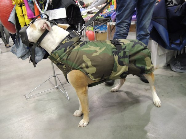 """Попоны для собак в зоомагазине при ветклинике """"Лаки"""""""
