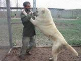 The World Famous Kurdish KANGAL & AKBAS Dogs !