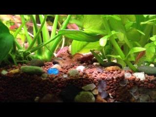 Nature Aquarium Aquascape