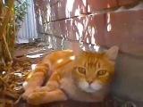 Смешно видео про животных Необычный кот