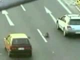 Собака, рискуя своей жизнью, спасала другую...