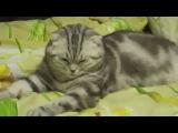 Кошка отрубилась . Cat tired after playing