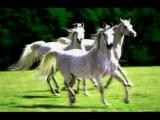 История диких лошадей, живущих в Америке