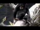 обезьяна нюхает палец