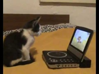 Кот смотрит мультик 'Том и Джерри' (прикол в самом конце)