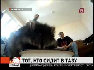 В Челябинске енот стирает носки хозяину
