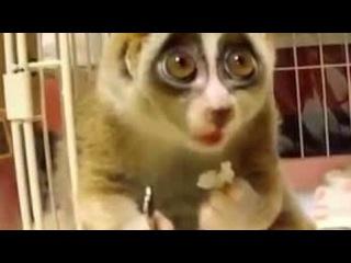 Милейший стеснительный зверек кушает. Смотреть онлайн - Видео - bigmir)net