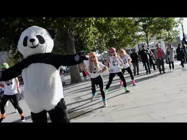 PSY - GANGNAM STYLE (PARODY) Panda
