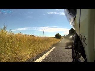 Koala and biker survive a close encounter