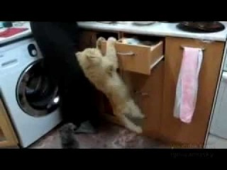 про котов ржач до слёз подборка 2013