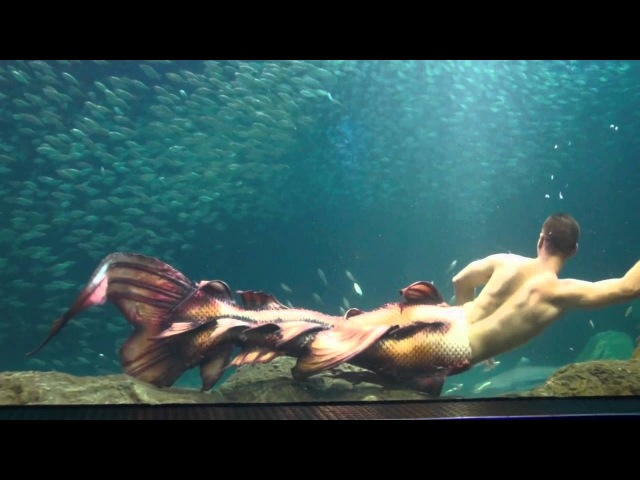 Mertailor's Newest Mermaid Tail Design