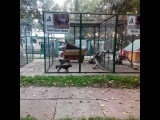 d_nexx video