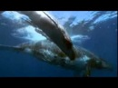 YouTube Vangelis Voices Come To Me HD