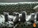 Pisici haioase (funny cats)