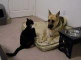 Cat VS kommissar Rex