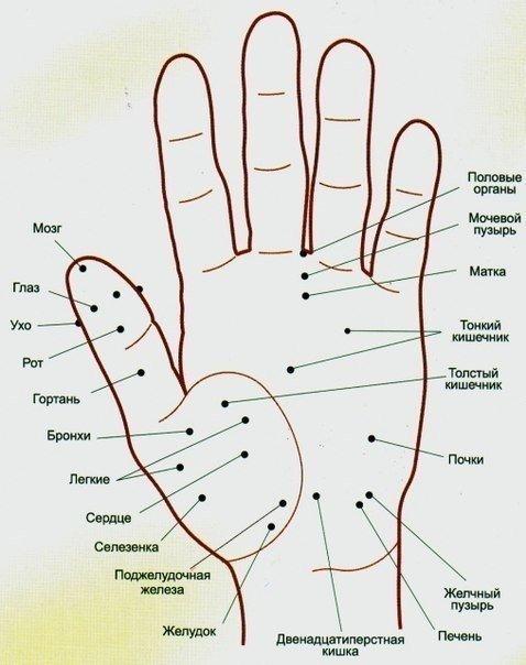 Волшебные точки на теле человека. Будьте всегда в форме 🙌 -Точка активации силы. Если собрать вместе кончики всех пальцев, она будет находиться в ямке в центре ладони. Если вы чувствуете вялость, упадок сил, апатию, сонливость, массируйте эту точку. -Точка тепла. Находится на подушечке верхней фаланги среднего пальца. Воздействие на точку помогает согреться, стимулирует обмен веществ, снимает состояние тревоги. Ее можно массировать в волнительных ситуациях, перед экзаменом или важной встречей.…