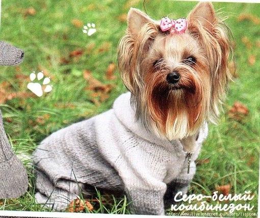 вязание для собак,