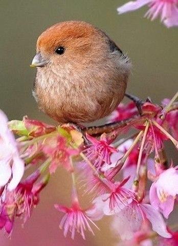 птичка
