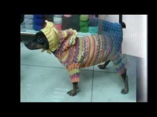 вязаная одежда для собак, модели и схемы