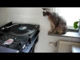 Abyssinian kitten DJ scratching hip hop cat