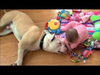 Vicious bulldog and his baby