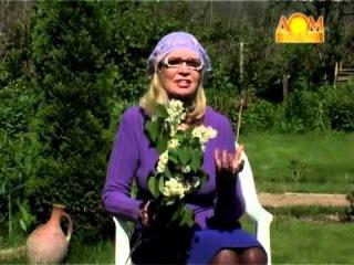 Как вырастить крупный корневой сельдерей?