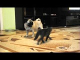 Кот, котик, пес, кот и пес, смешно, я плакал, ржака, мило :)
