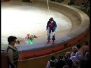 Программа Вива, Зорро! в передаче Под куполом цирка